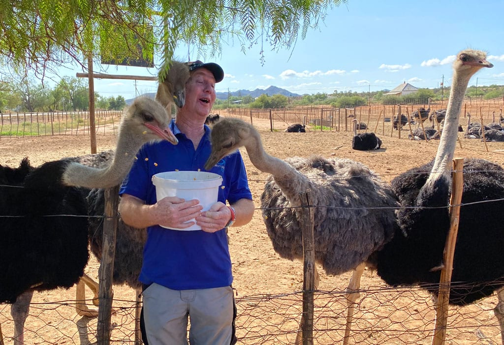 Feeding the Ostriches.
