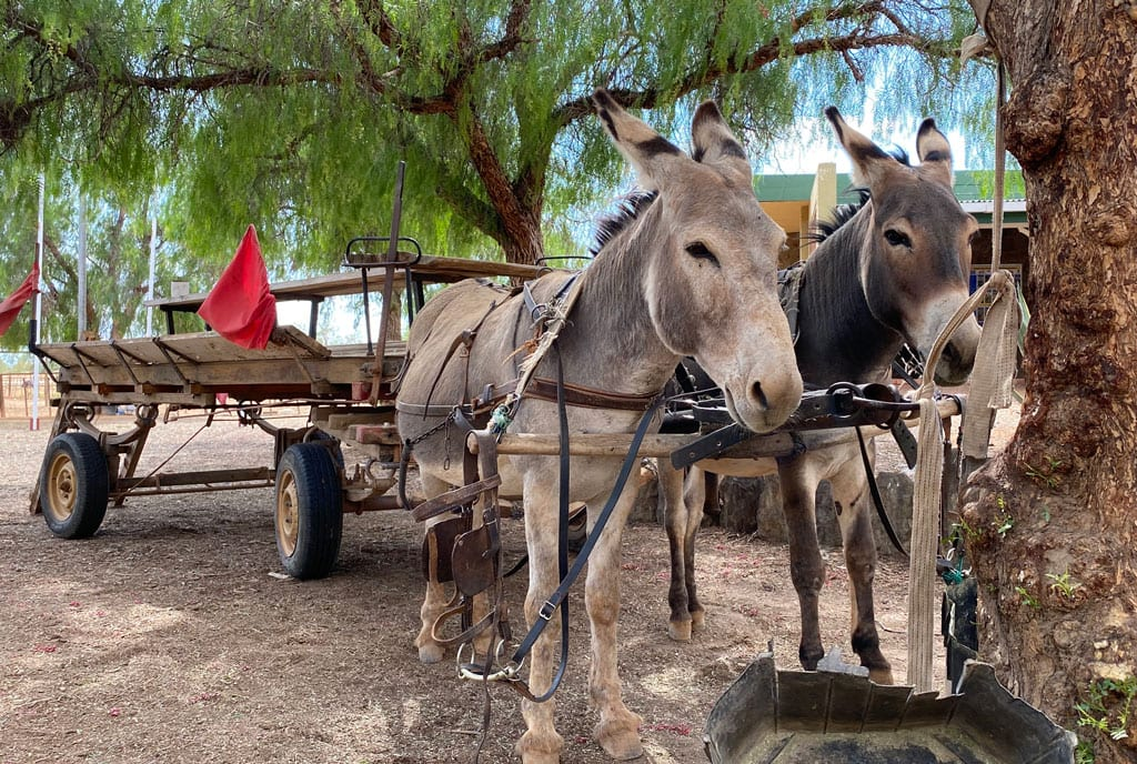 Two Donkey's attached to a cart.